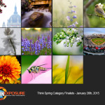 Finalists – January 26th, 2015 – Think Spring