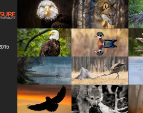 Wildlife_Finalists