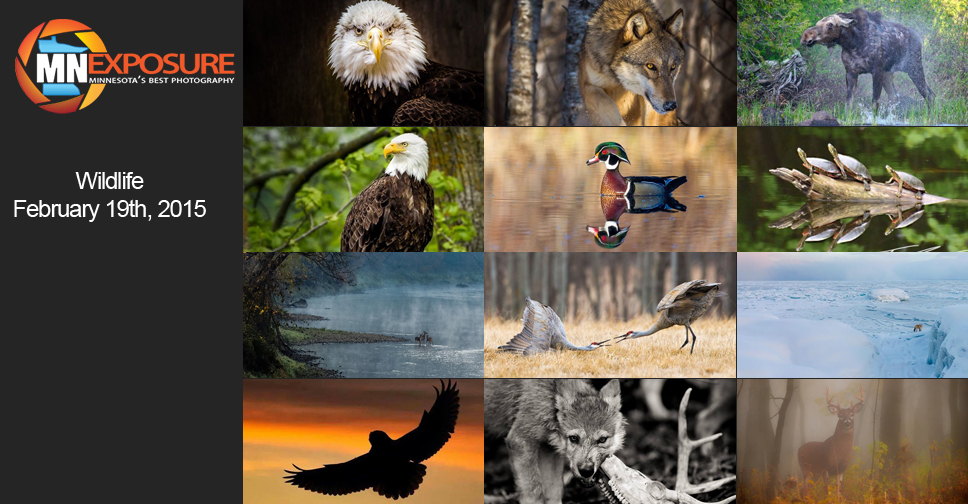 Wildlife_Finalists