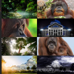 Finalists – Como Park Zoo & Conservatory