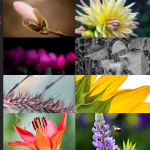Finalists – May 28, 2015 – Flowers