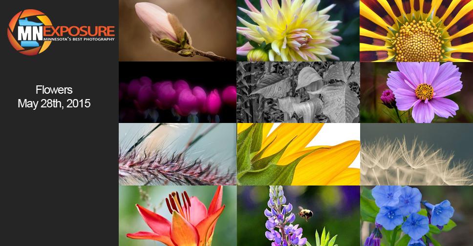 Flowers-Finalists