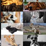 Finalists – May 21, 2015 – Pets
