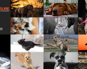 Pets-finalists