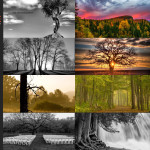 Finalists – May 11, 2015 – Trees