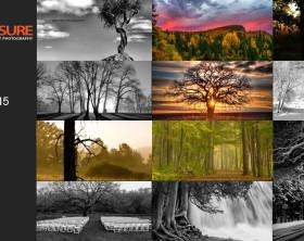 Trees-Finalists