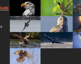 Birds-Finalists