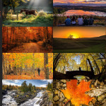 Finalists – October 12, 2015 – Autumn