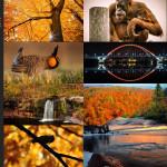 Finalists – October 26, 2015 – Orange