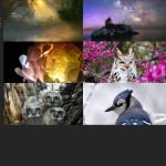 Finalists – June 6, 2016 – Nature